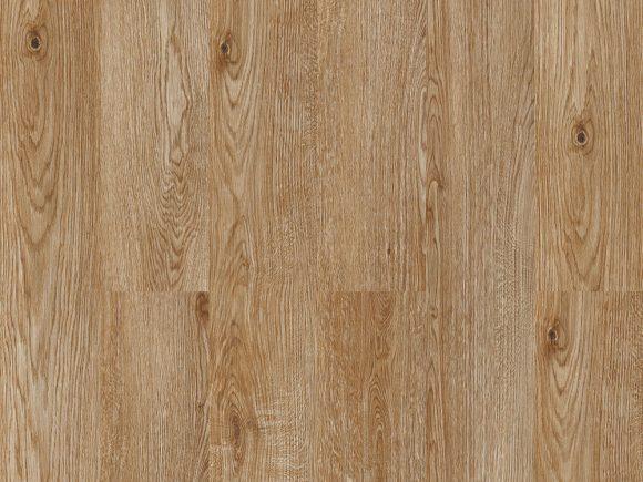 Corkwood Filbert
