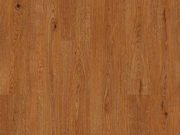 Corkwood Locust