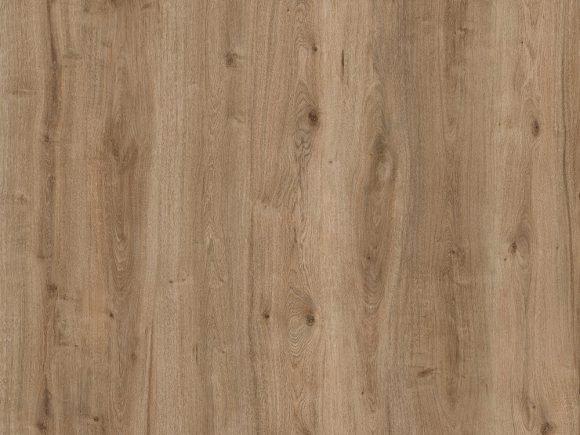 Corkwood Kauri