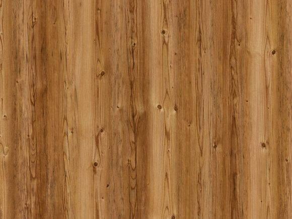 Corkwood Sweetgum